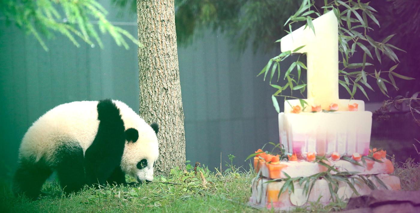 Bon anniversaire Pandasuite !